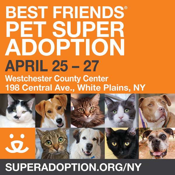 FINAL_2014 Pet Super Adoption_facebook_2048x2048.jpg